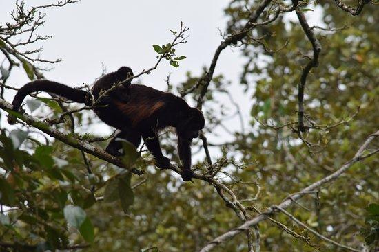 monkeys - a barrel full of them! Modesto can spot them all!