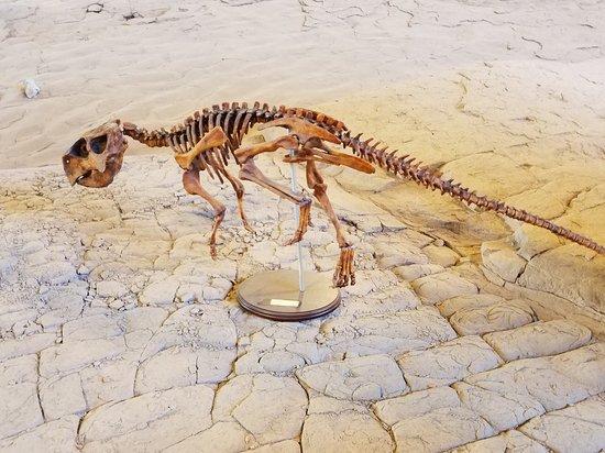 20180329 120638 001 Large Jpg Picture Of St George Dinosaur Discovery Site At Johnson Farm Tripadvisor