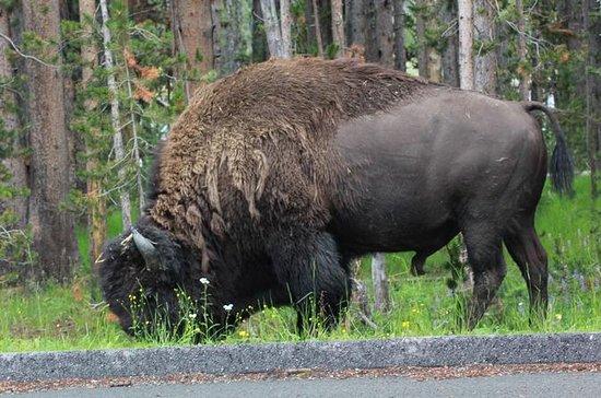 Private Grand Teton Full-Day Wildlife ...