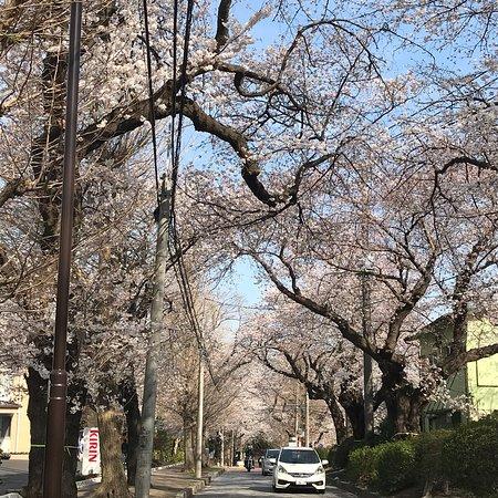 Kashiwa, اليابان: photo9.jpg