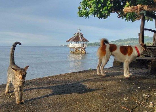 Jagna, Filippinene: Paseo Pets