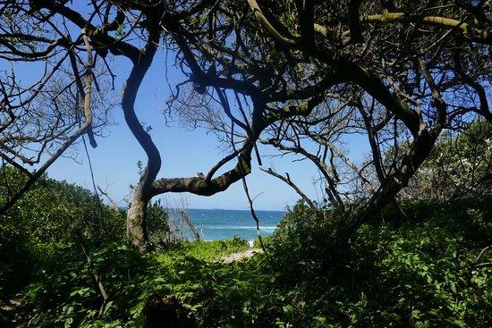 Umhlanga Lagoon Nature Reserve