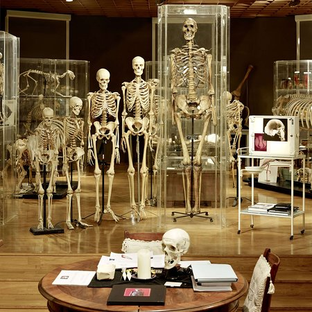 Museum of Anatomy