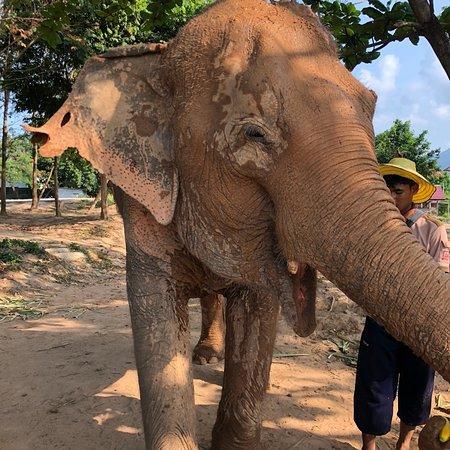 Samui Elephant Sanctuary Photo