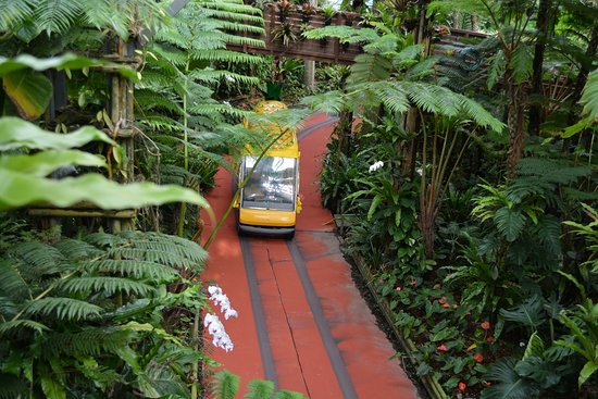 Nago Pineapple Park Photo