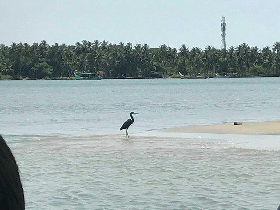 Kadalundi Bird Sanctuary: Scenic kadalundi