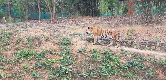 ‪‪Nagaland Zoological Park‬: 20180225_153350_large.jpg‬