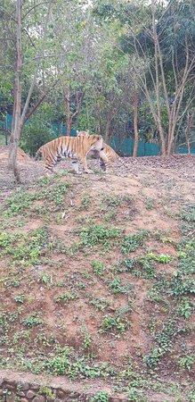 Nagaland Zoological Park: 20180225_153450_large.jpg