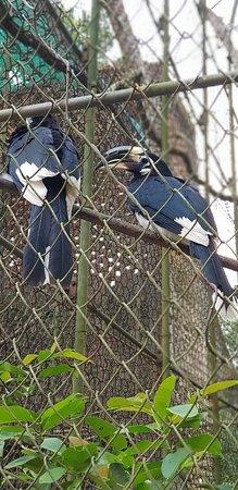 Nagaland Zoological Park: 20180225_161643_large.jpg