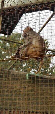 Nagaland Zoological Park: 20180225_152823_large.jpg