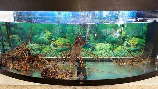 Mouria Fish Tavern Agnontas: Ζωντανο ενυδερείο με αστακούς
