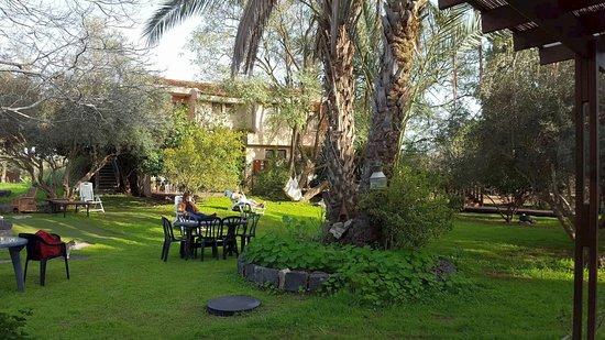 Sharona, Israel: Relaxing in our garden