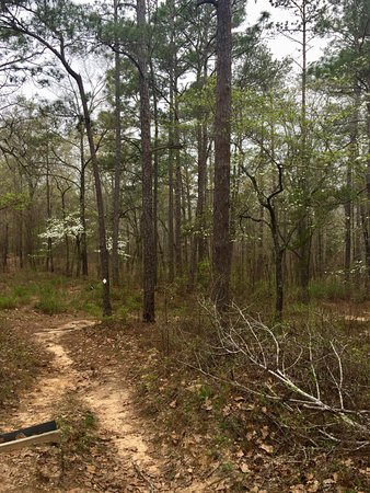 Tuskegee, อลาบาม่า: View of sloped trail in northern section of Bartram Trail