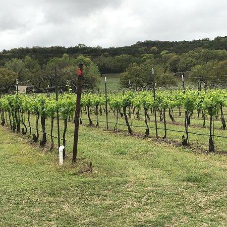Flat Creek Estate Winery: photo9.jpg