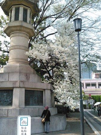2018.3.29(木)☀外苑・高燈籠と🌸(第二鳥居・付近)