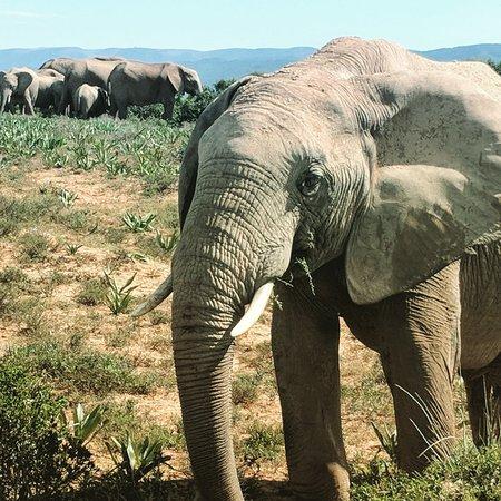 Addo, Güney Afrika: IMG_20180329_201701_883_large.jpg