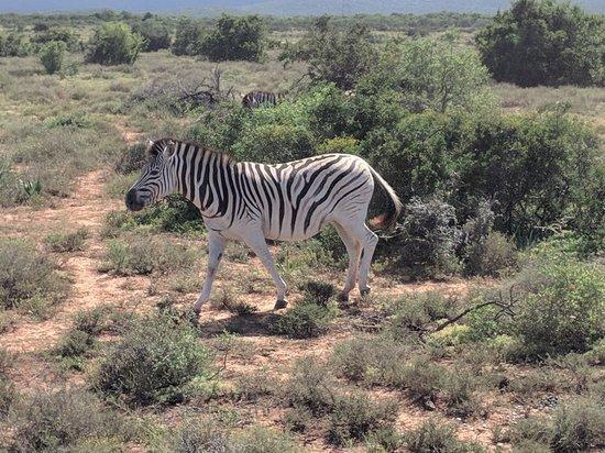 Addo, Güney Afrika: MVIMG_20180328_104032_large.jpg