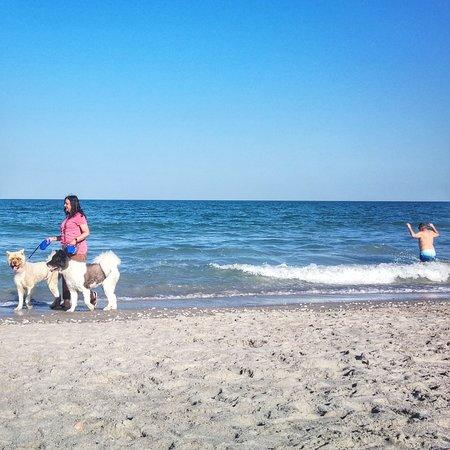 Canova Beach Dog Park