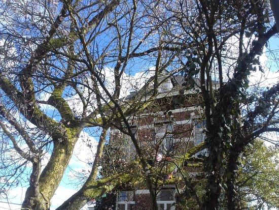 Hoeilaart, Belgien: Daar is de lente...