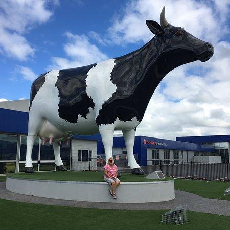 Morrinsville, Nueva Zelanda: photo0.jpg