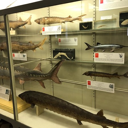 Zoological Museum Photo