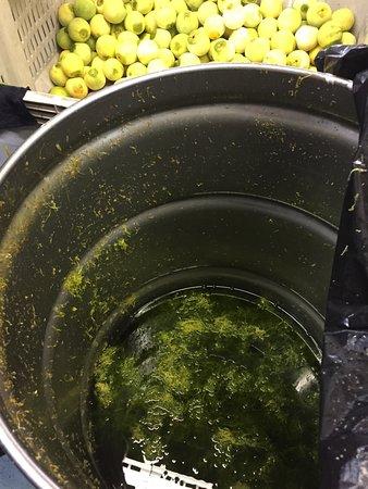 Fernandina Beach, FL: Orange zest in the stainless steel barrel. Orange juice is used also.
