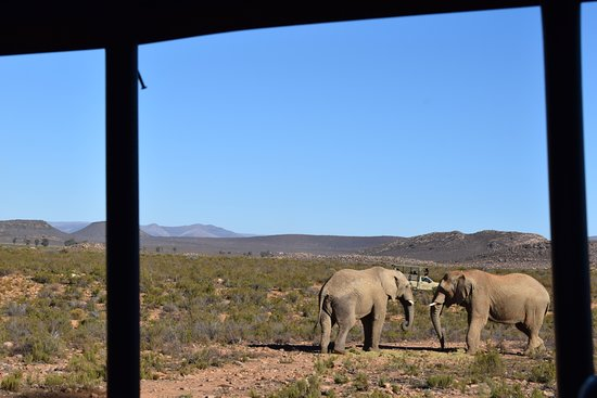 Aquila Private Game Reserve: On the Game Drive
