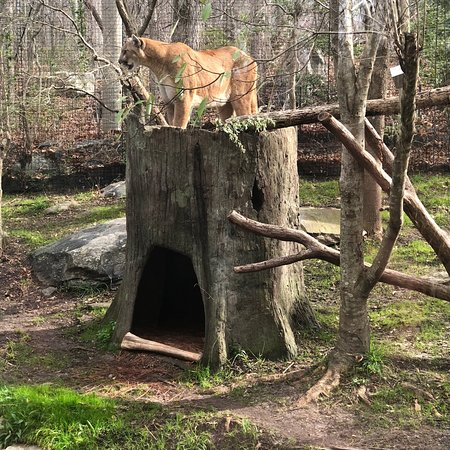 North Carolina Zoo (Asheboro) - 2019 All You Need to Know BEFORE You ...