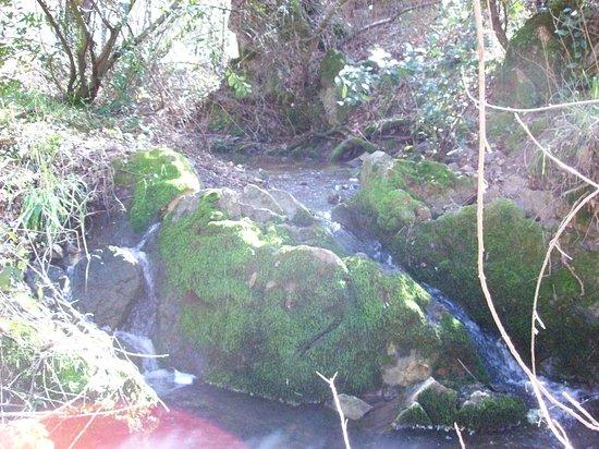 Fiddletown, แคลิฟอร์เนีย: seasonal creek near farmhouse