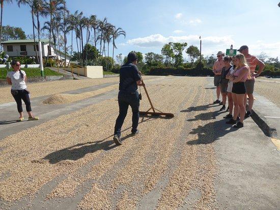 Doka Estate Coffee Tour: Outdoor Drying Process