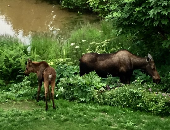 A Stellar View: Moose at our pond