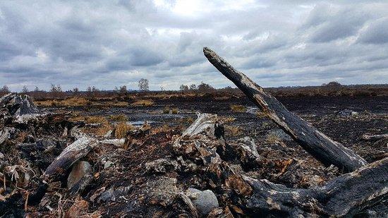 Keenagh, Ireland: 20180330_161441-01_large.jpg