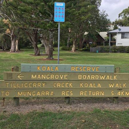Lemon Tree Passage, Australien: Koala Reserve Mangrove Boardwalk