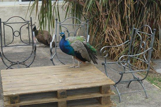 Trinidad, أوروجواي: Animales
