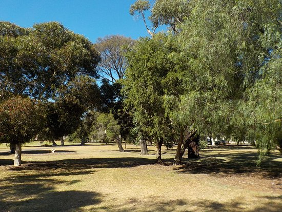 Black Rock, Australien: Grass and trees