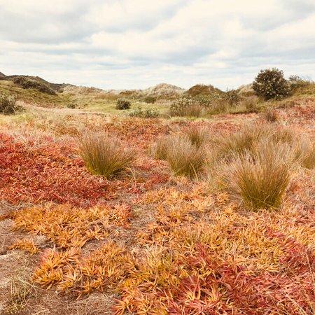 Kumeu, New Zealand: Beautiful scenery surrounds the camp ground