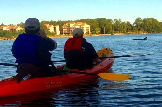 Dolphins & Wildlife Kayak Tour