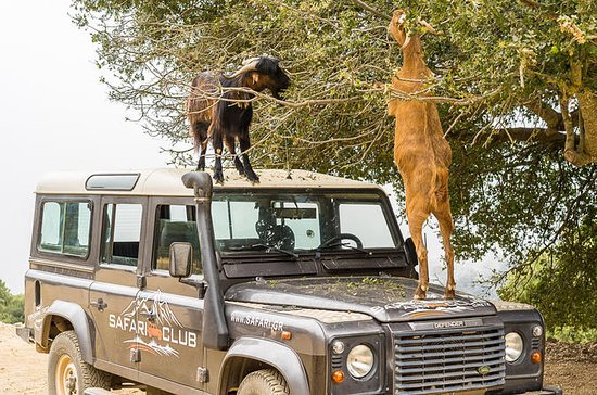 Full-Day Land Rover Safari van ...