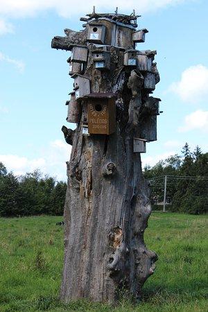 Plateliai, Litwa: Birdhouses