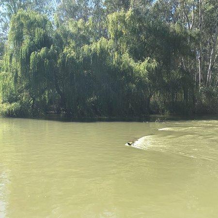 Barmah, Australia: photo2.jpg