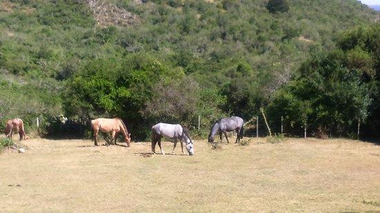 Villa Serrana, Uruguay: Vue de la terrasse sur les chevaux