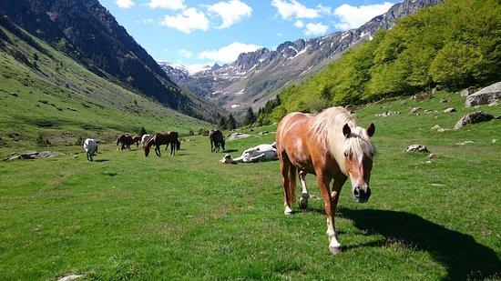 Centre Equestre Le Lienz
