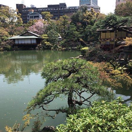 Sorakuen Garden: photo5.jpg