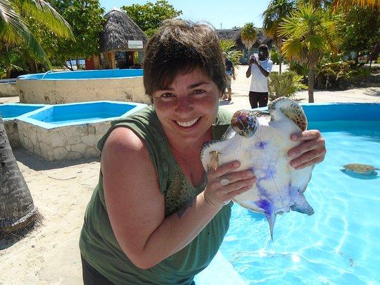 Sea Turtle Hatchery : mignon