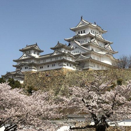 桜とベストマッチ