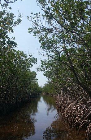 Jungle Erv's Everglades Airboat Tours Photo