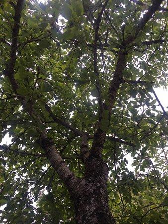 Guillaumes, France: Sieste sous les arbres