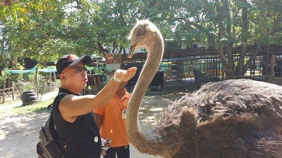PD Ostrich Show Farm: IMG-20180331-WA0078_large.jpg