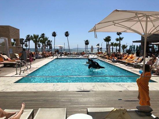 Pasea Pool Picture Of Pasea Hotel Amp Spa Huntington