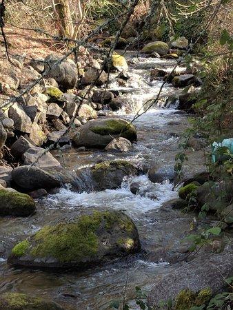 Parque Lithia: Peaceful